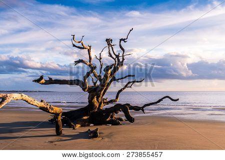 Driftwood Beach In Georgia