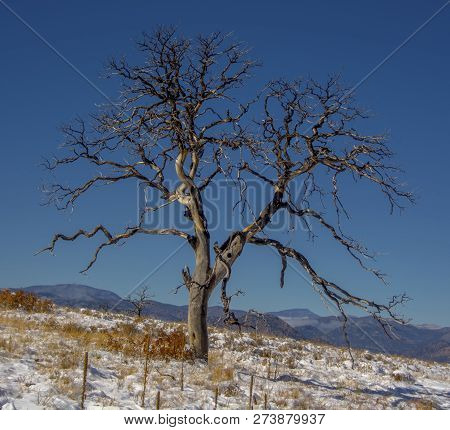 A Twisted Old Tree Continues To Stand Stark Against The Blue Sky After Being Killed By A Forest Fire
