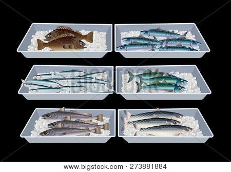 Fresh Fish In Container Boxes. Vector Illustration Isolated On Black Background