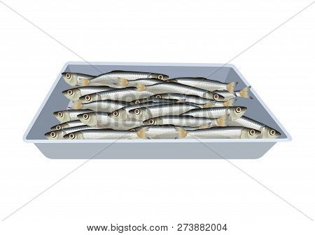 Fresh Small Fish Lies In The Tray. Vector Illustration Isolated On White Background