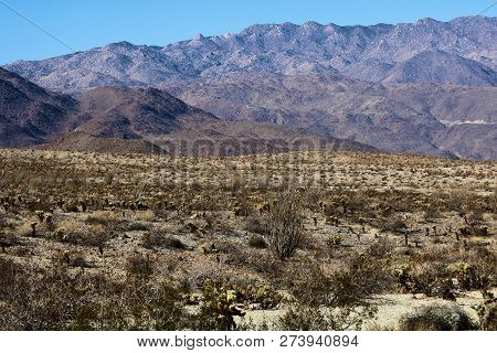 Arid Landscape Including The Creosote Shrub And Cholla Cactus On The Desert Floor With Mountains Bey