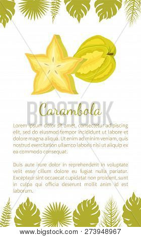 Carambola Or Starfruit Exotic Fruit Vector Poster With Text Sample And Palm Leaves. Tropical Edible