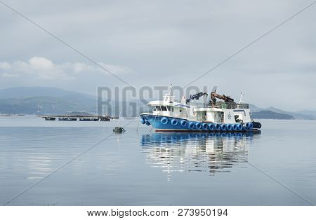 Mussel boat and mussel bed in sea. Mussel aquaculture. Marine landscape. Rias Bajas Galicia Spain poster
