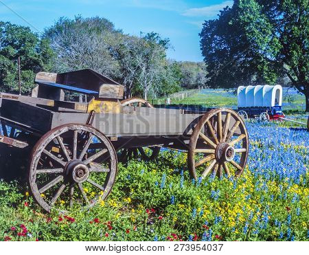 Wagons And Covered Wagons In Feld Of Blue Bonnets