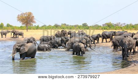 Large Herd Of African Elephants Congregate And Have Fun At A Waterhole With A Pale Blue Sky And Natu
