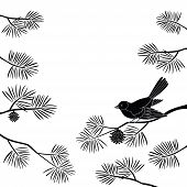 Black and white background, bird titmouse sitting on pine branch. Vector poster
