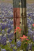 Field of Bluebonnets in a Texas field with a Texas flag superimposed on a barbed wire fence post poster