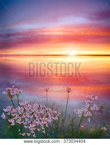 Stunning Sunset On The Lake With White Wildflowers. Beautiful Sunset Over The River. Sunrise At Lake