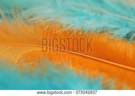 Feathers Background. Fluffy Orange And Blue Feathers Row. Macro Feather Texture.. Feathers Set Close