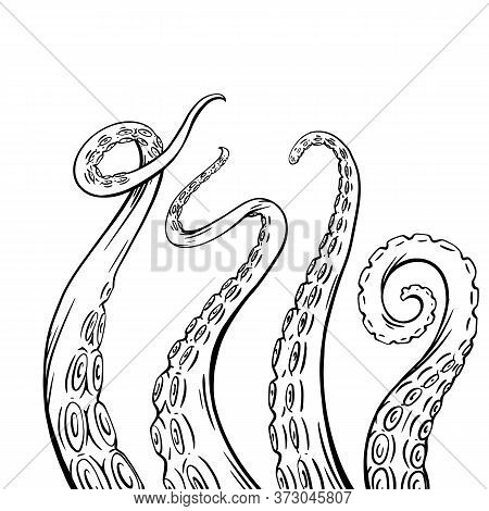 Set Of Black And White Sketches Octopus Tentacles. Creepy Limbs Of Marine Inhabitants. Vector Object
