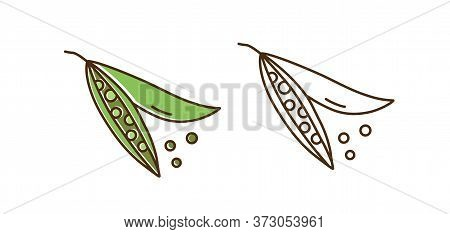 Set Of Colorful And Monochrome Pea Vector Illustration. Cute Organic Natural Peas In Line Art Design