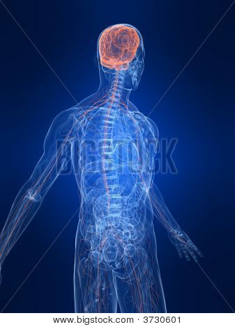 Highlighted Nervous System