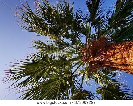 Palm Trees And Blue Sky As Very Nice Background