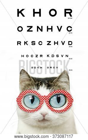 Funny Blue Eyed Cat In Myopia Eye Glasses Red Rim With Hearts Close Up Portrait With Eye Chart