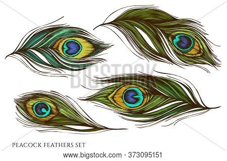 Vector Set Of Hand Drawn Colored Peacock Feathers Stock Illustration