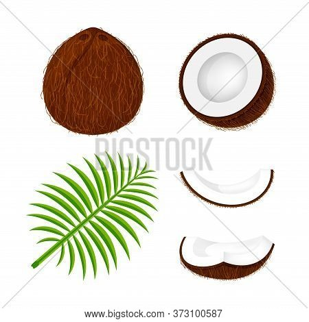 Coconuts Fruit Set Isolated On White, Illustration Coconut Brown And Leaf For Clip Art, Coconut Frui