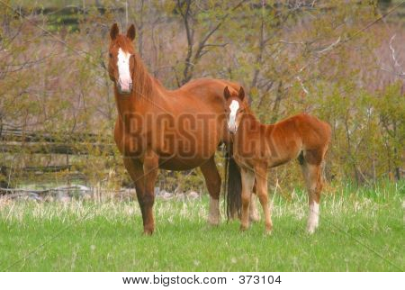 Horse And Foal 2