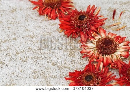 Bright Red Flowers Gerbera On Natural Cotton Cloth And Coarse White Crystals Of Salt. Natural Flower