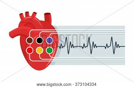 Electrocardiography (ecg) Icon - Human Heart With Sensors And Paper Report Or Heart Rate - Isolated