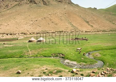 Landscape With Local Farm, Cows And Central Asian Tents Yurt. Scene In Narrow River Green Valley, Ru
