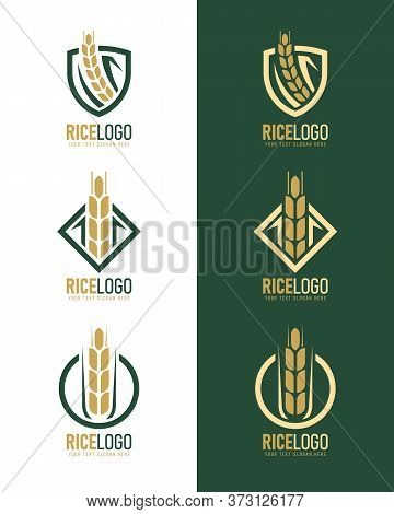 Gold Green Rice Logo With Modern Paddy Rice In Frame Style Vector Collection Design