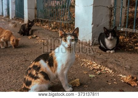 Group Of Stray Hungry Cats On The Street In City. A Lot Of Homeless Dirty Cats Walk Outdoors And One