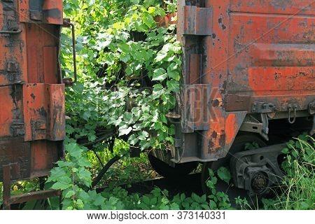 Old Lifeless Railway, Overgrown With The Creeping Vineyard. Abandoned Rusty Wagons On Railway Tracks