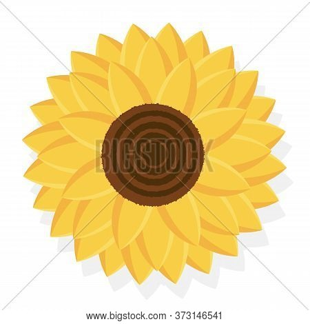 Yellow Sunflower Vector Flower Illustration, Natural Flora On A White Background. Sunflower On A Whi