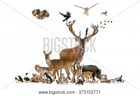Large group of various european fauna animals, red deer, red fox, bird, rodent, isolated