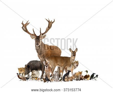 Large group of european fauna, red deer, red fox, bird, rodent, wild boar, isolated