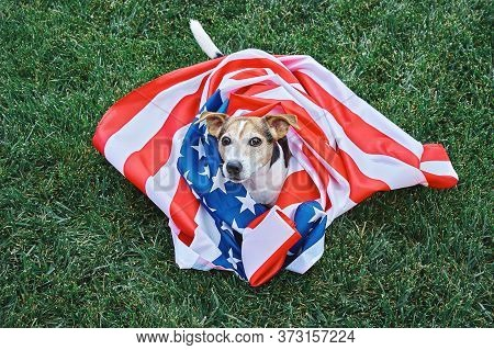 Dog Lies On Grass Wrapped In American Flag. Celebration Of Independence Day, 4th July, Memorial Day,