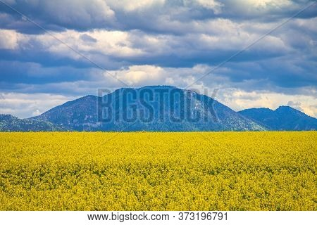 Landscape With Fields Of Oilseed Rape, Hills And Sky With Dramatic Clouds In The Background.