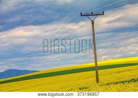 Landscape With Fields Of Oilseed Rape, Power Line Pylon On Foreground.