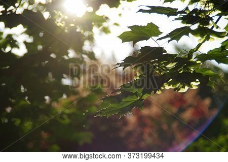 Tranquility Concept. Calm Scene In Forest With Sun In Background. Sunbeams Among Leaves.