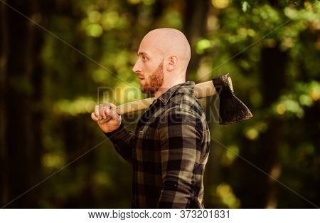 Bald Woodsman Worker. Live On Rancho. Concept Of Masculinity. Bearded Hipster Cut Tree. Man Checkere