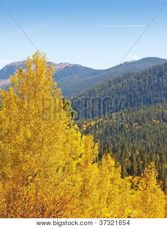 Colorado Aspen Tree And Mountain View