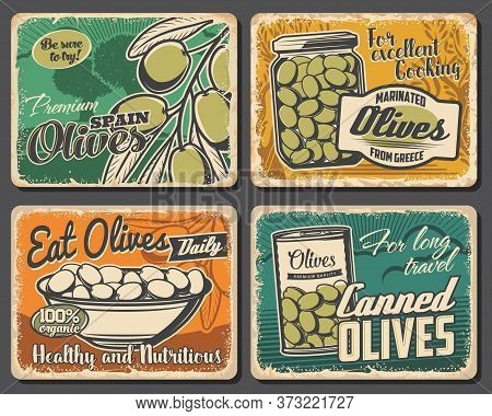 Farm Natural And Canned Olives Vector Retro Posters. Green Olives Fruits On Tree Brunch, Served In B