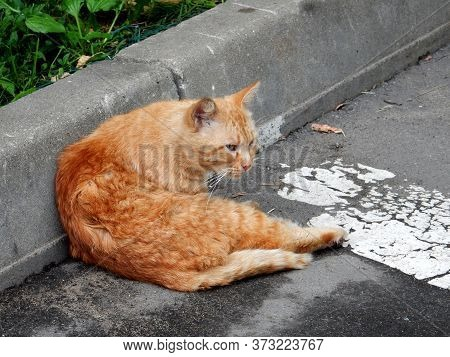 Ginger Cat With Long White Whiskers Sitting On The Road