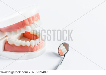 Teeth Model And Dental Mirror On White Background Close-up. Dental Care Concept. Copy Space.