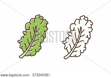 Set Of Green And Monochrome Leaves Of Kale In Line Art Style. Fresh Leaf Of Colorful And Outline Cab