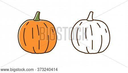 Set Of Natural Colorful And Outline Monochrome Pumpkin Vector Illustration. Seasonal Autumn Squash W
