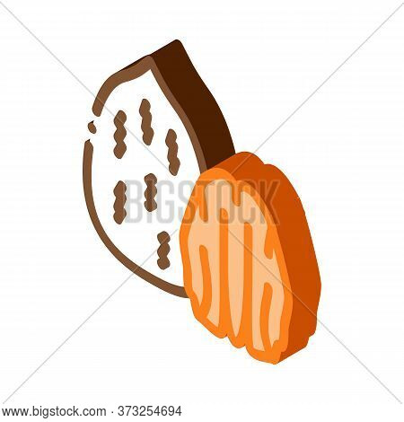 Pecan Nut Icon Vector. Isometric Pecan Nut Sign. Color Isolated Symbol Illustration