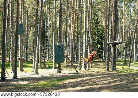 Little Boy With Climbing Gear Climbing Rope Trail Between Pine Trees In An Adventure Park. Boy Enjoy