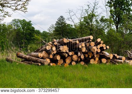 Woodpile With Long Logs Laying In The Grass, In The Background A Few Trees