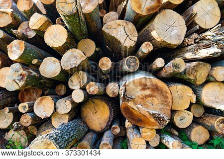 Fresh Woodpile With Logs In Different Sizes