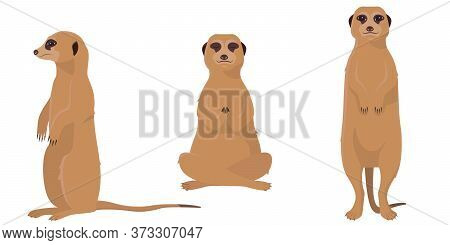 Meerkat In Different Poses. Cute Animals In Cartoon Style Isolated On White Background.