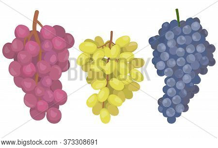 Grapes Of Different Varieties. Berries In Cartoon Style Isolated On White Background.
