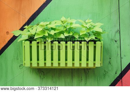 Green Flowers In Pots On Street In Residential Complex. Pots With With Bush Plants Against The Backg