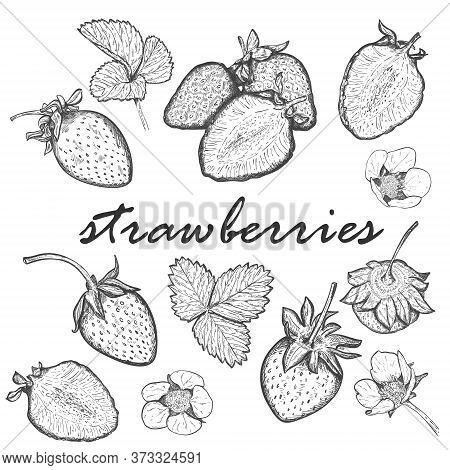 Large Set Of Strawberries. Collection With Berries, Whole And Halves, Leaves And Blooming Strawberry