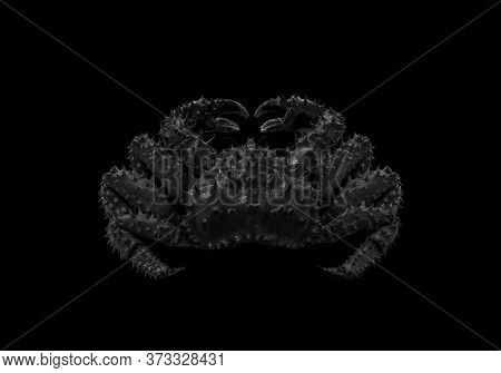 Black Crab On An Isolated Black Background.
